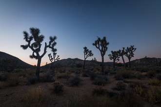 Christoph Schaarschmidt, joshua tree (United States, North America)