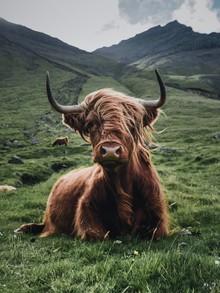 Dominic Lars, Trendige Haare (Färöer Inseln, Europa)