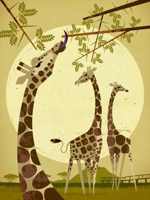 Dieter Braun, Giraffes (Germany, Europe)