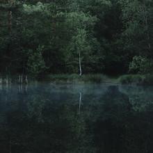Nadja Jacke, Morgenstimmung im Juni im Furlbachtal - Teutoburger Wald - an den Bentteichen (Deutschland, Europa)