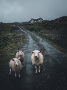 Leo Thomas, sheep thrills (Norway, Europe)