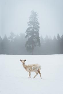 Patrick Monatsberger, Das weiße Reh (Deutschland, Europa)