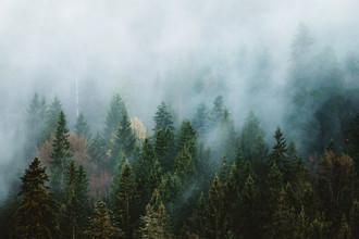 Asyraf Syamsul, Black Moody Forest (Germany, Europe)