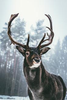 Patrick Monatsberger, Der König des Waldes (Deutschland, Europa)