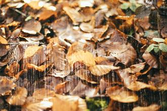 Nadja Jacke, Leuchtende Herbstfarben im Teutoburger Wald (Deutschland, Europa)