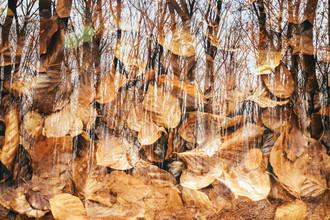 Leuchtende Herbstfarben im Teutoburger Wald - fotokunst von Nadja Jacke