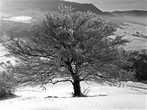 N. Von Stackelberg, vereister Baum in der Wintersonne (Deutschland, Europa)