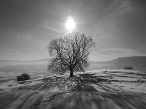 N. Von Stackelberg, eisbedeckter Baum im Sonnenlicht (Deutschland, Europa)