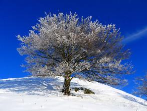 N. Von Stackelberg, eisbedeckter Baum 2 (Deutschland, Europa)