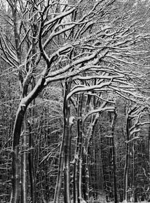 Schneewald - fotokunst von Kay Block