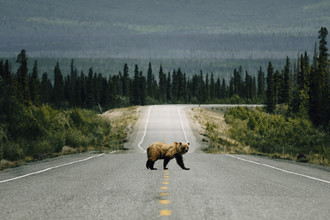 Johannes Höhn, Bear Crossing. (Canada, North America)