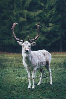 Patrick Monatsberger, Das Wesen aus dem Wald (Deutschland, Europa)