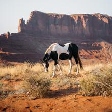 Jannik Heck, Wild West (United States, North America)