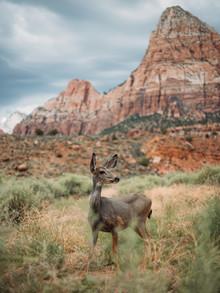 Jannik Heck, Bambi (Vereinigte Staaten, Nordamerika)