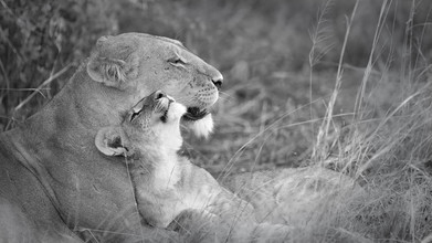 Dennis Wehrmann, Lion mother with her little one (Botswana, Africa)