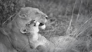 Dennis Wehrmann, Löwenmutter mit Jungem (Botswana, Afrika)