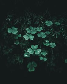 Luca Jaenichen, Dark Green (Deutschland, Europa)
