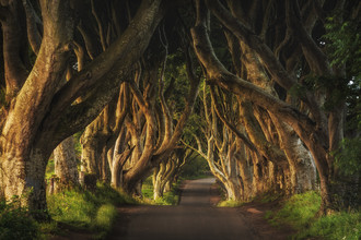 Irland - The Dark Hedges Sunrise - fotokunst von Jean Claude Castor