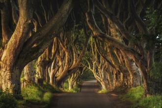 Jean Claude Castor, Irland - The Dark Hedges Sunrise (Ireland, Europe)
