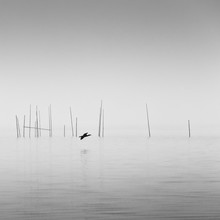 Holger Nimtz, Cormorant (Germany, Europe)