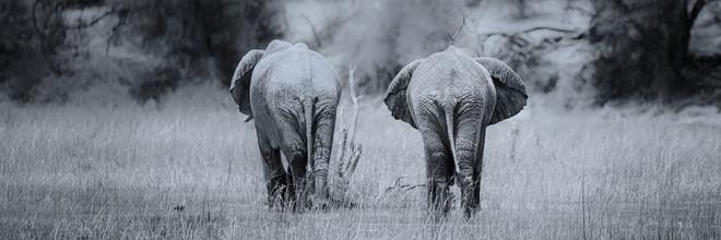 Dennis Wehrmann, elephants in makgadikgadi pans national park (Botswana, Africa)