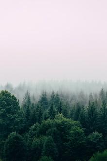 Nebelwald - fotokunst von Christian Hartmann