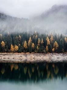 Christian Hartmann, Herbstlicher Wald Reflektion (Schweiz, Europa)