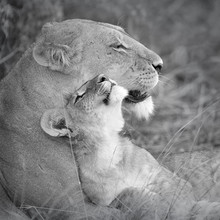 Dennis Wehrmann, mother`s love (Botswana, Africa)