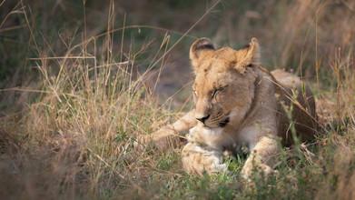 Dennis Wehrmann, baby lion (Botswana, Africa)