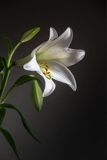 Björn Witt, Lily (Deutschland, Europa)
