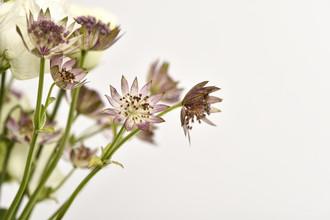 Markus Hertrich, Flower Art (Germany, Europe)