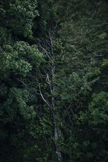 Nadja Jacke, Kreislauf des Lebens im Wald (Deutschland, Europa)