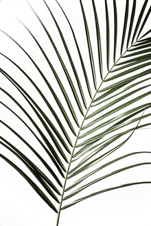 Mareike Böhmer, Palm Leaves 8 (Germany, Europe)