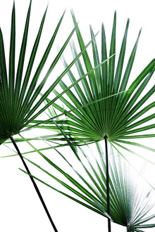 Mareike Böhmer, Palm Leaves 12 (France, Europe)
