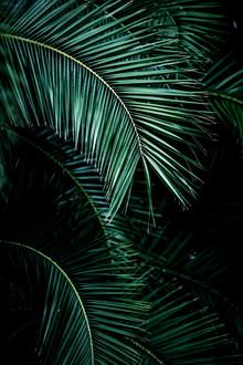 Mareike Böhmer, Palm Leaves 9 (Frankreich, Europa)