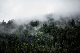 Mareike Böhmer, Foggy Woods 5 (Switzerland, Europe)