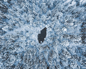 Quentin Strohmeier, The Cold South (Deutschland, Europa)