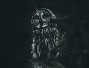 Quentin Strohmeier, Wizard Owl (Germany, Europe)