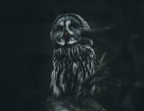 Quentin Strohmeier, Wizard Owl (Germany, Europe)