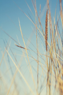 Nadja Jacke, Beach grass against a bright blue sky (Spain, Europe)