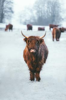 Patrick Monatsberger, Kuh and the Gang (Deutschland, Europa)