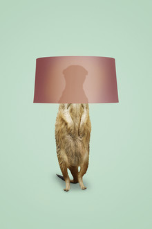 Jonas Loose, Meerkat Lamp (Germany, Europe)