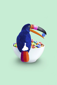 Cereal Toucan - Fineart photography by Jonas Loose