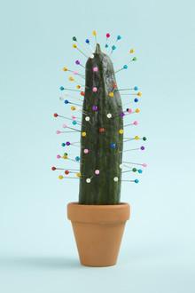 Loulou von Glup, Cactus Voodoo (Belgium, Europe)