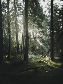 Frithjof Hamacher, Rays (Deutschland, Europa)