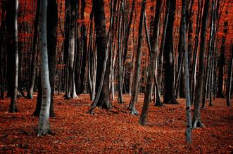 Stefan Wensing, Feuerwald im Herbst (Deutschland, Europa)