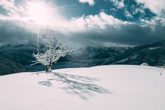 Sebastian 'zeppaio' Scheichl, The white tree (Austria, Europe)