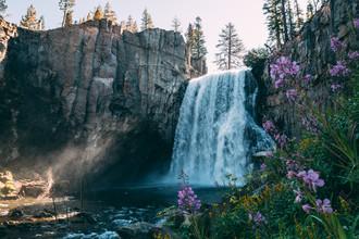 Sebastian 'zeppaio' Scheichl, Blumen am Wasserfall (Vereinigte Staaten, Nordamerika)