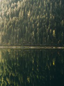 Sebastian 'zeppaio' Scheichl, Reflected Trees (Austria, Europe)
