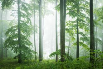 Heiko Gerlicher, Wald VII (Deutschland, Europa)